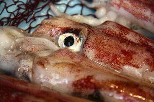 calamar bordo