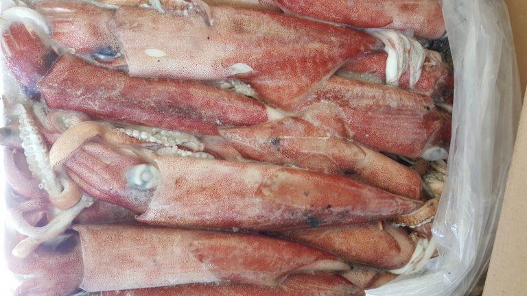 Calamar chino