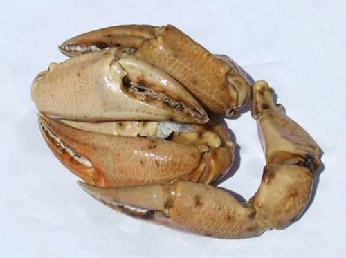 bocas de cangrejo
