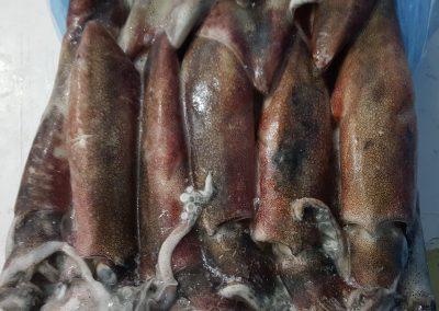 Calamar Sudafrica